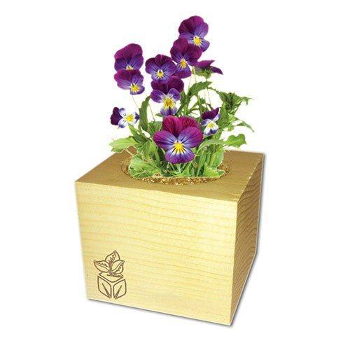 ecocube des fleurs pr tes pousser dans des cubes en bois. Black Bedroom Furniture Sets. Home Design Ideas
